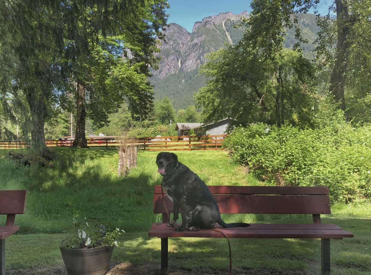E. J. Roberts Park Dog on Carl's Bench