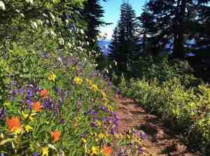 Pacific Crest Trail Wildflowers