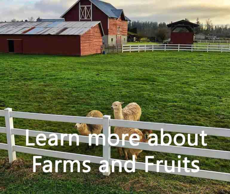 Farms and Fruits