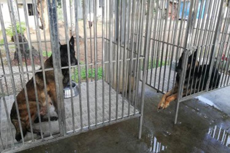 Retired PDEA K9 dogs up for adoption