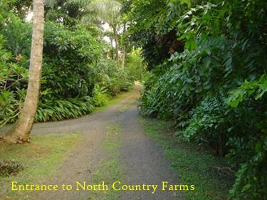 ncf-entrance