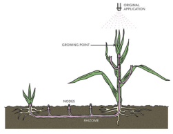 Contact Herbicides