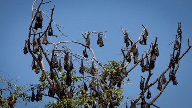 Photo of A bizarre village in India where bats are worshipped