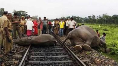 Assam: speeding train kills 5 wild elephants
