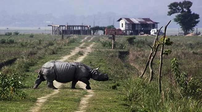 Assam: Pobitora Wildlife Sanctuary have 102 Rhino- census report