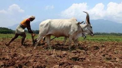 Assam: Kishan Kalyan Karyashala held in Hailakandi