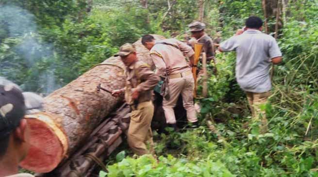 Assam:Fores officials seizes Illegal Sal Logs worth of Rs 10 Lakhs