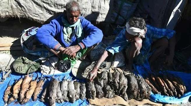 Assam: Rat meat is more popular than chicken in Kumarikata