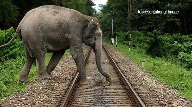 Assam: Elephant lost life in train accident near lumding