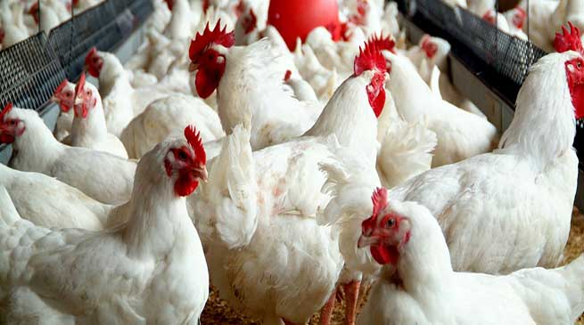 Assam: Training on poultry farming conducted in Hailakandi