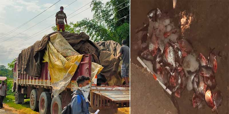 Assam: 480 kg stale fish imported from Andhra Pradesh seized and destroyed in Hailakandi