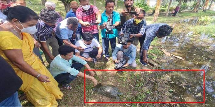 Assam: WTI's veterinarian removes fishing hook swallowed by endangered turtle