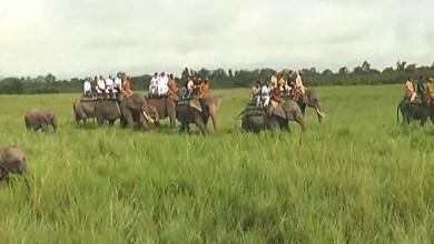 Assam: Kaziranga National Park reopen for Tourists