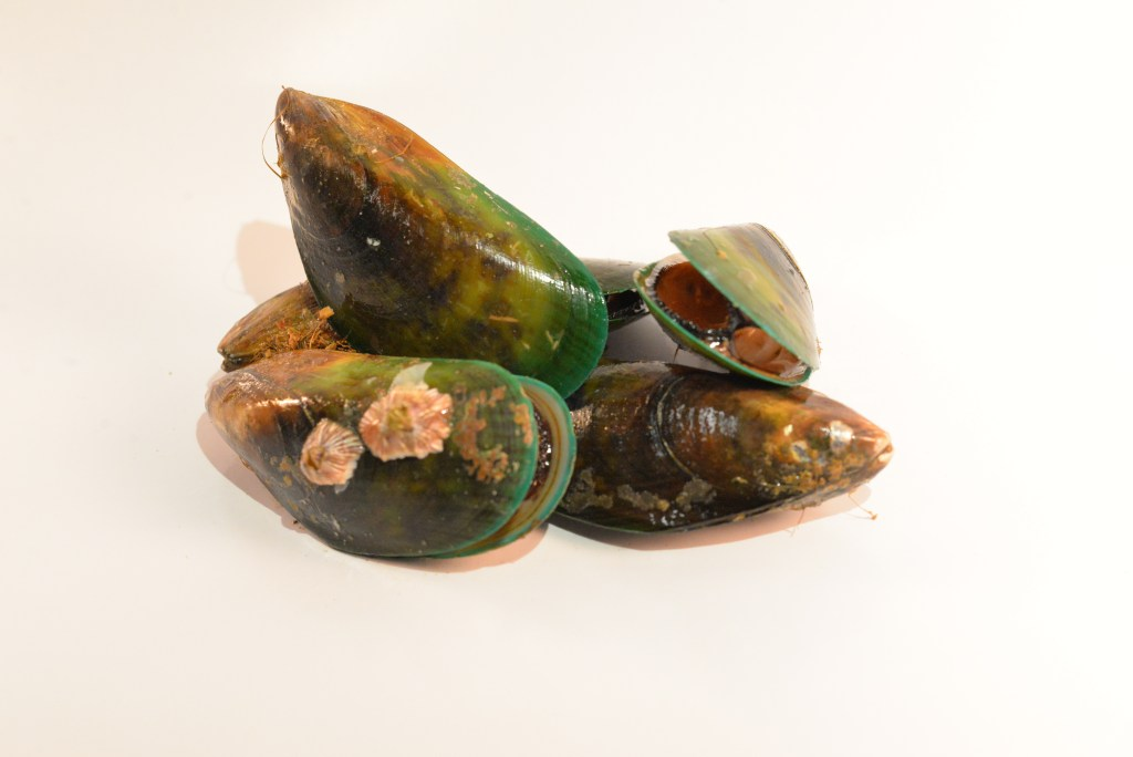 Mussel, Greenlipped