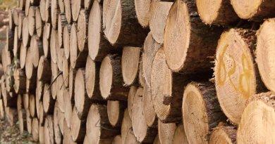 Spaziergänger aufgepasst: Am Wieter werden Bäume gefällt