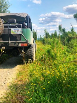 Toyota Landcruiser and wildflowers