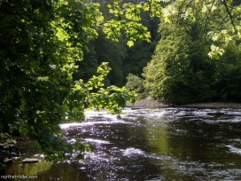 River Swale & Billy bank Wood, Richmond, North Yorkshire