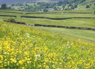 Swaledale meadows