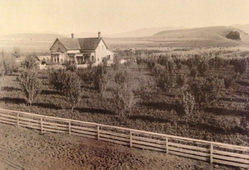 Jacob planted an orchard of fruit trees by his house, but in this late 1880s photo, they are all still quite small.  (Photo thanks to Judy Jackson.)