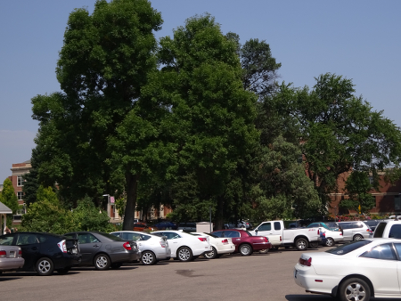 University Center for the Arts at Colorado State... behind trees.