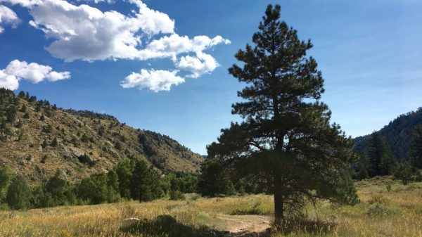 Pinehurst is located in Sheep Gulch along the Poudre River.