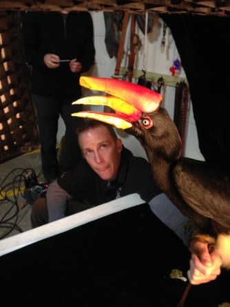 A behind-the-scenes look at a bird posing with his trainer for photographer Joel Sartore's Photo Ark project. Photo Courtesy of Evan Sgouris