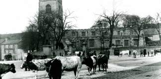 Skipton cattle fair 1900