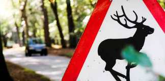 warning deer