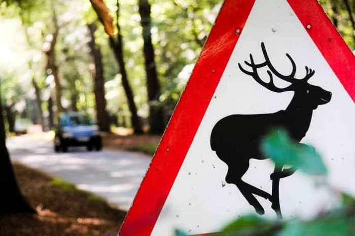 warning deer