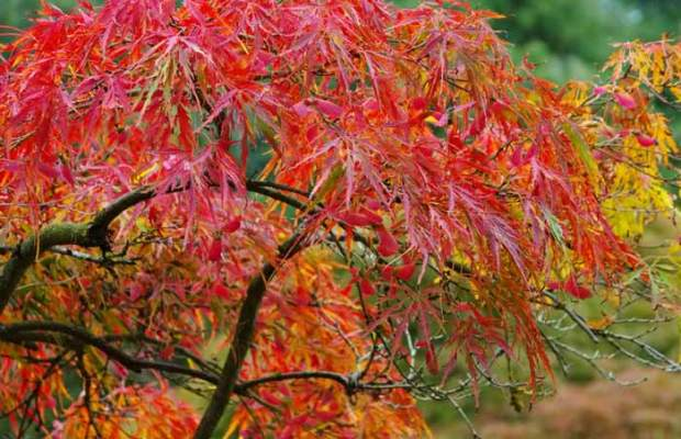 What to plant in autumn
