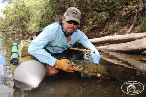 Severn Murray Cod on Fly