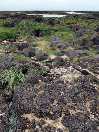 iceland-lava-coast