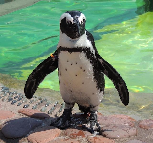 penguin encounter long island aquarium and exhibition center
