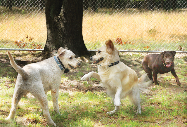 dog parks north fork epcal calverton