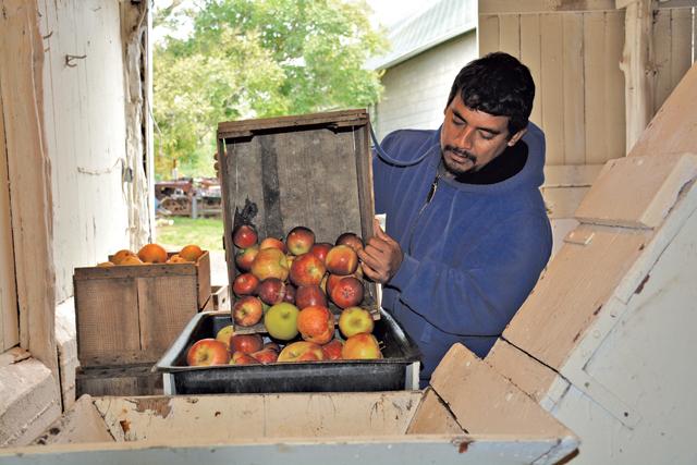 Wickham's Fruit Farm apple press