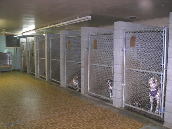 northgate kennel