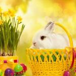 An Easter bunny in a basket