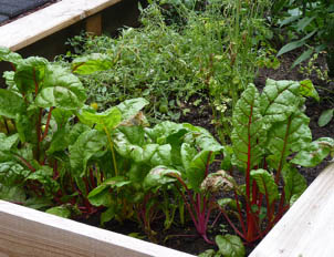 The Basics of Planning a Vegetable Garden