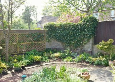 Peaceful courtyard garden with four seasons of interest   Adel
