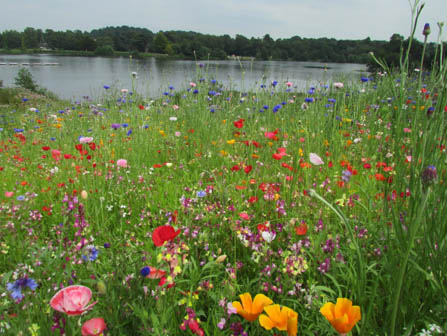 06 Meadow Planting in Your Garden_1 copy