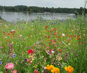 Meadow Planting in Your Garden