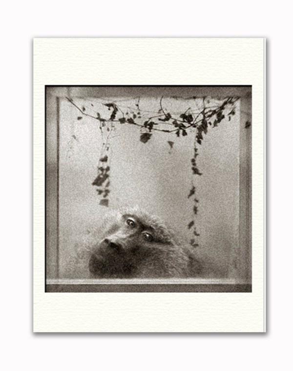 Through Glass – Anne Berry