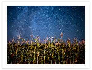 "Bill Schwab – ""Star Maize – Emmet County, MI, 2018"""