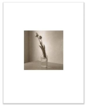 "Bill Schwab – ""Tulips – 1984"" (Salt Print)"