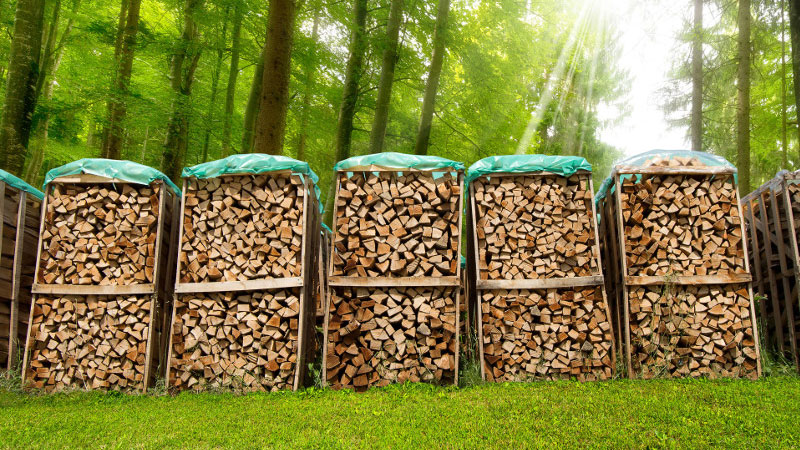 How long does it take green firewood to dry