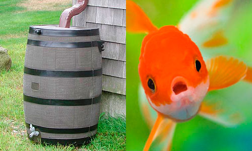 4-rain-barrel