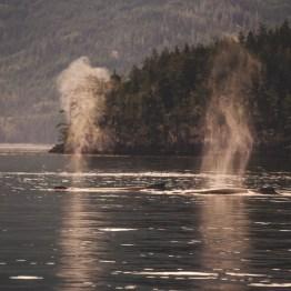 Telegraph Cove, Vancouver Island, BC