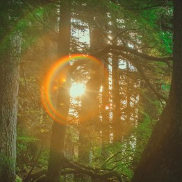 Ancient Rainforest, Gregory Beach, Haida Gwaii