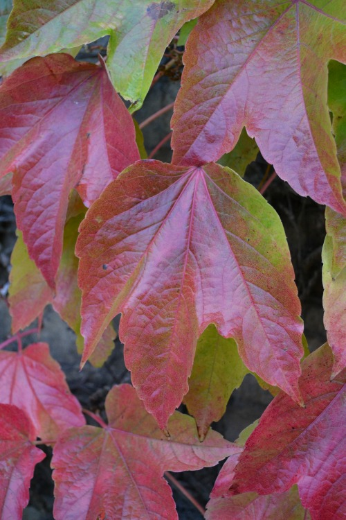 Autumn Leaves Natural Patterns