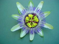 Green Violet Flower for Natural Patterns by W Lodge